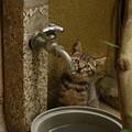 Photos: 蛇口のバルブ、ひねりたい…