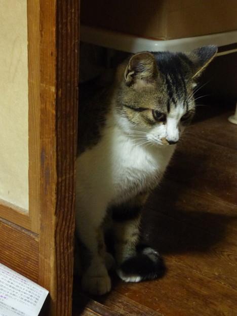 密偵猫!?