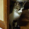 写真: 密偵猫!?