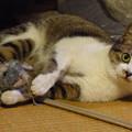 写真: 「ぬいぐるみの猫」と戯れる…