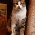 写真: 玄関での送り迎えは…!?(2)