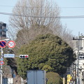 Photos: 300メートル弱先の史跡をズームにて…冬の西ヶ原一里塚