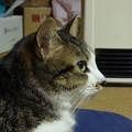ダクトからの温風にあたる猫