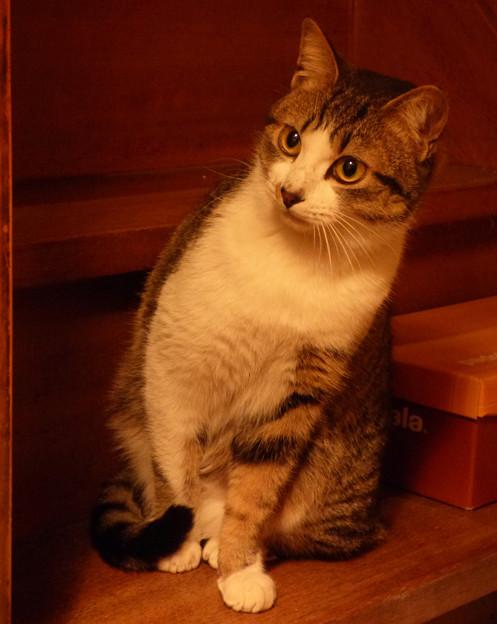 Photos: にゃん・にゃん・にゃん…『猫の日』前夜