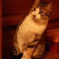 写真: にゃん・にゃん・にゃん…『猫の日』前夜