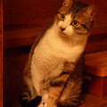 にゃん・にゃん・にゃん…『猫の日』前夜