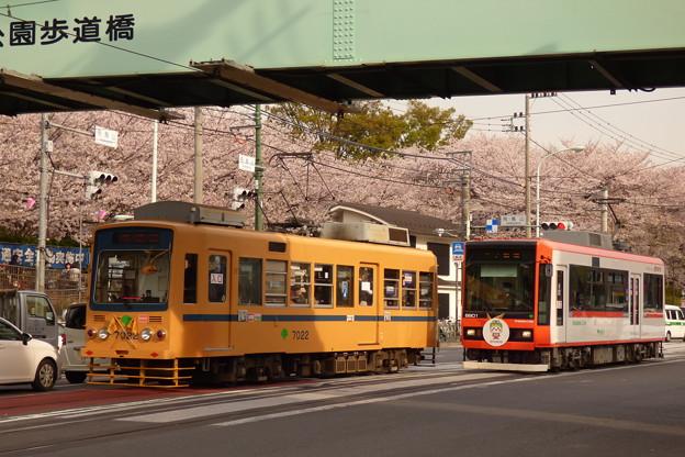 Photos: 沿線の桜の素晴らしさを『新車に伝える大ベテラン車』…?