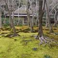 写真: 緑の絨毯
