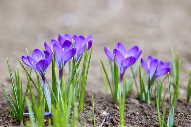 写真: 3月の詩