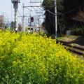 Photos: 菜の花と踏切