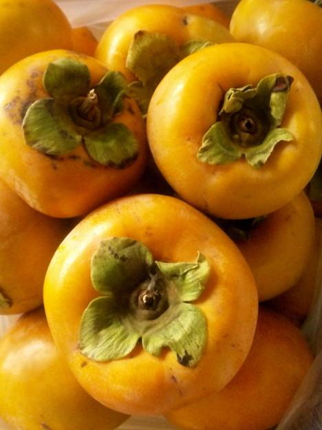 とれたての柿
