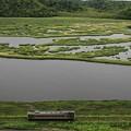 写真: 湿原を走る・・・