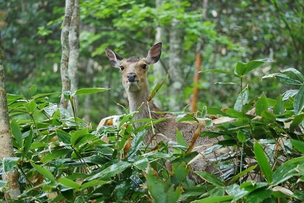 写真: 鹿さん♪
