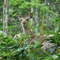 Photos: 鹿さん♪