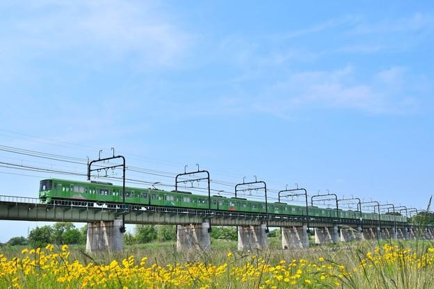 Photos: 初夏の河川敷