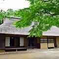 Photos: 萱葺屋根に夏もみじ