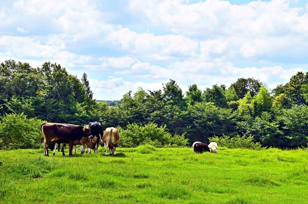 牧場のある風景