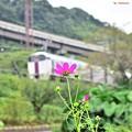 Photos: 秋に向けて(1)
