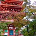 Photos: 見上げる秋色