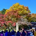 高尾山の秋景色(5)
