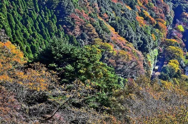 高尾山の秋景色(6)