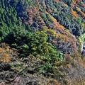 Photos: 高尾山の秋景色(6)