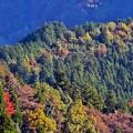 沿線の秋景色(9)