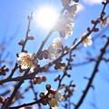 Photos: 陽春