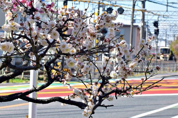 春色沿線1