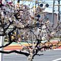 写真: 春色沿線1