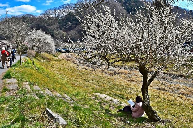 Photos: 春景色(高尾梅郷)