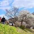 写真: 春恋の路