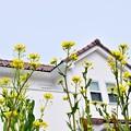 Photos: 春にバンザイ~♪
