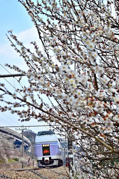 春色沿線9