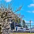 写真: 春色沿線10