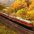 Photos: 紅葉シーズンの諏訪峡を行く115系その1