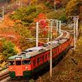 Photos: 紅葉シーズンの諏訪峡を行く115系その3