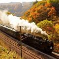 写真: 紅葉シーズンの諏訪峡を行くSLみなかみ