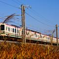 Photos: 107系とススキ