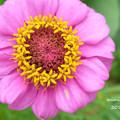 写真: 笑顔のお花