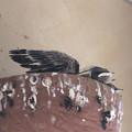 写真: 羽が伸びてきた