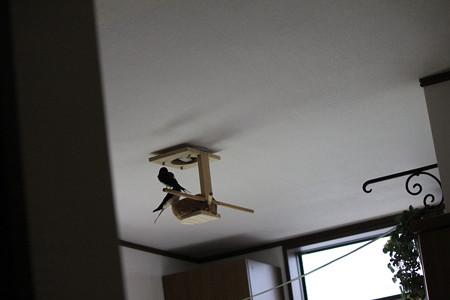 巣もイイね~