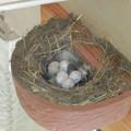 写真: 外の巣