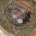 写真: 3羽さんの誕生