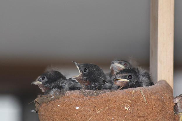 写真: 4羽ともに