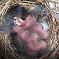 Photos: まだ卵残ってる?
