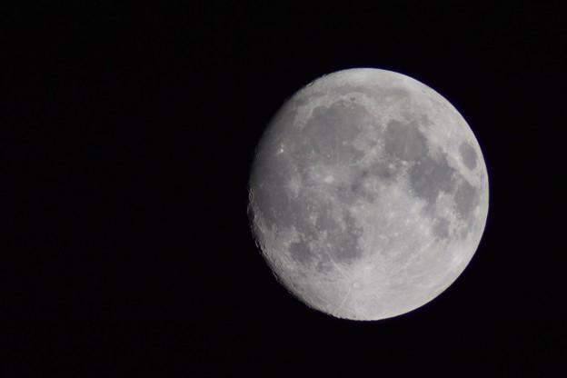 Photos: 満月じゃないけれど・・・