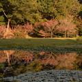 Photos: 静かになった公園にて