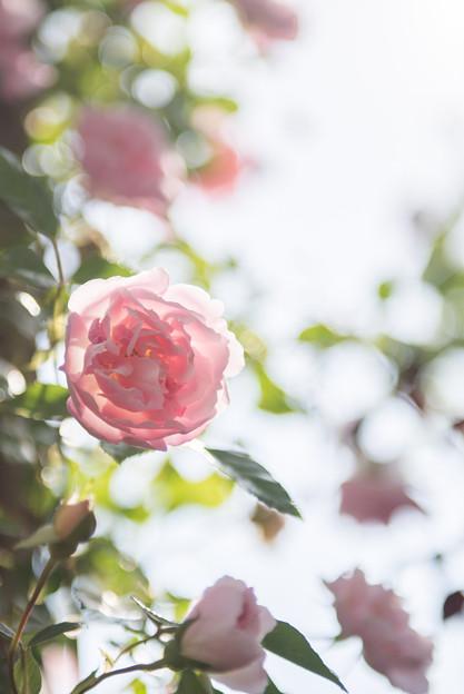 【YEG(フランソワ・ジュランヴィル)】2