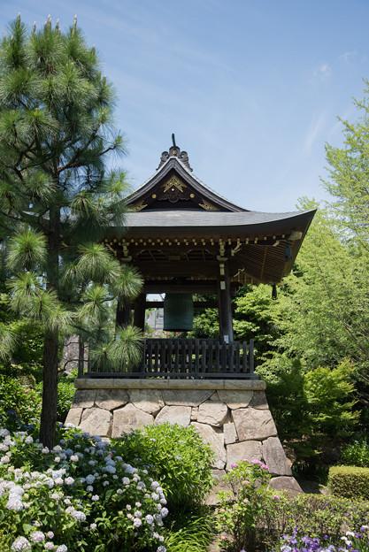 【正覚寺の鐘と紫陽花】